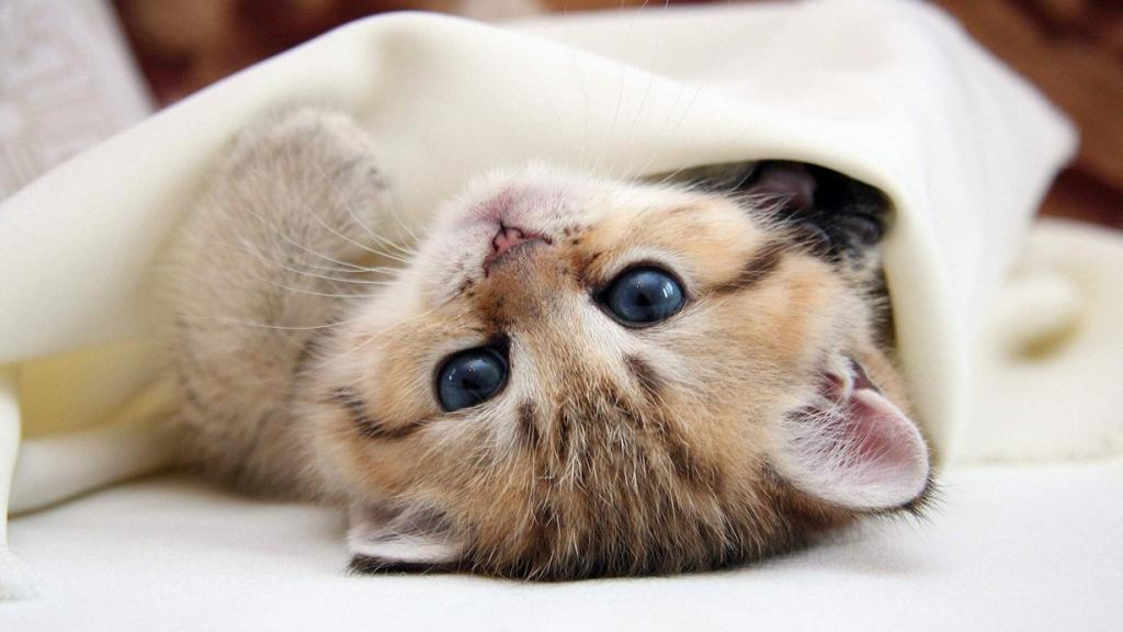 Кошка по кличке Дасти — рекордсмен по численности потомства. В период с 1935 по 1952 она родила 420 котят. (Goneys)