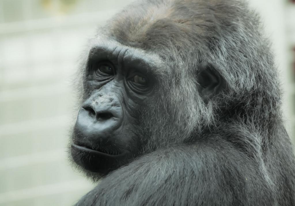 Животные реагируют на социальное давление подобно людям. (@Doug88888)