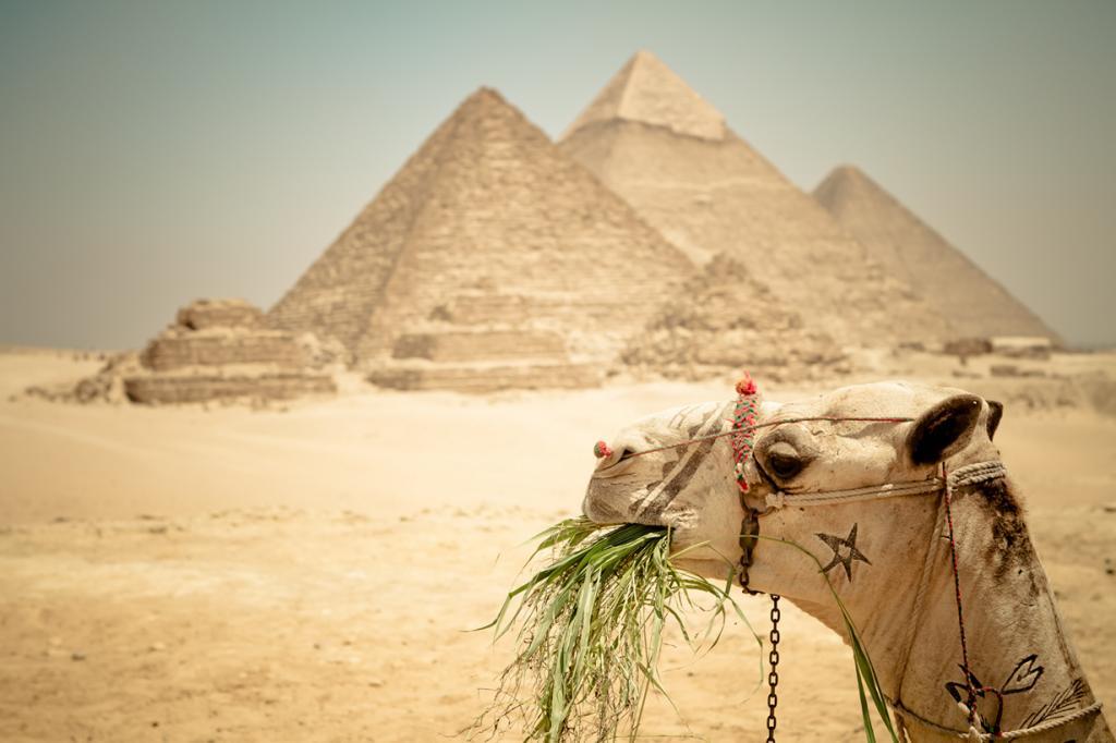 Строителям пирамид в Древнем Египте платили пивом — по 4 литра в день. (The.Rohit)