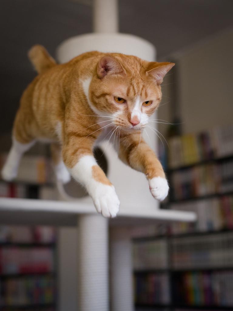 Коты способны пережить падение с высоты благодаря своим рефлексам. (Akimasa Harada)