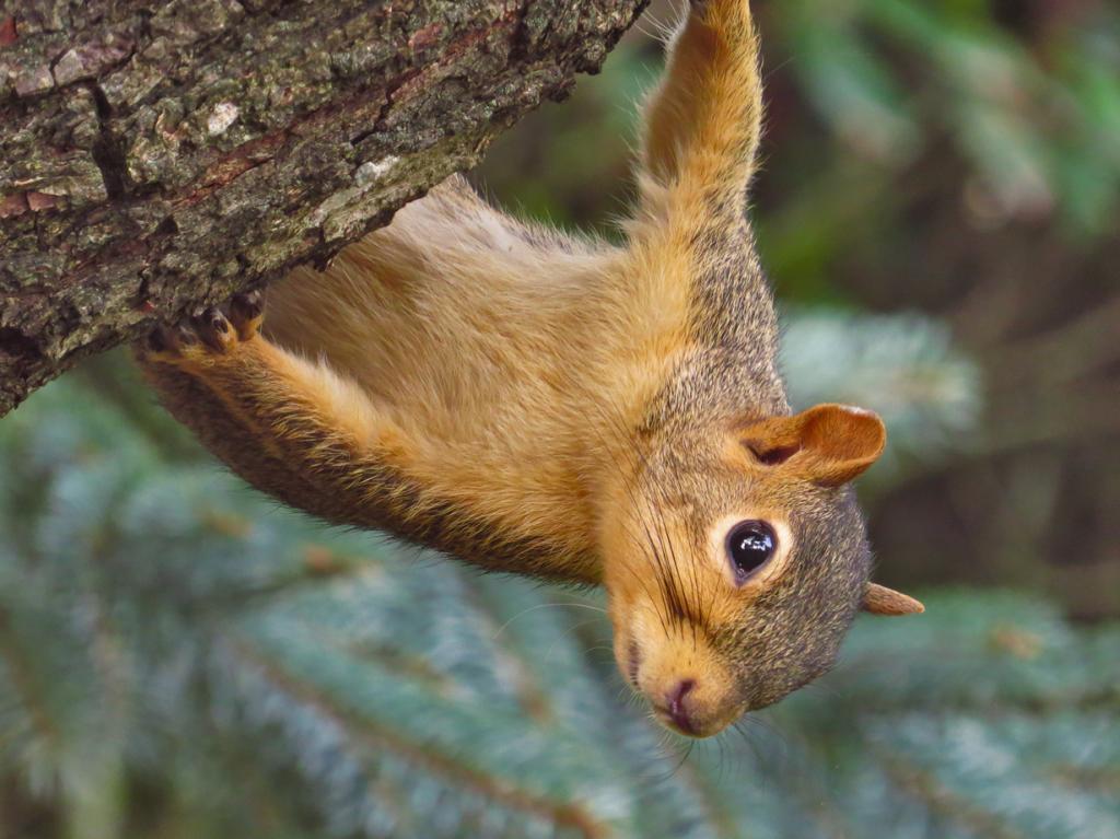 Мелкие животные ощущают время медленнее, чем человек. (Richard Griffin)