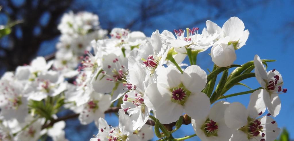 Цветы весны: Восхитительные цветущие деревья, которыми невозможно налюбоваться