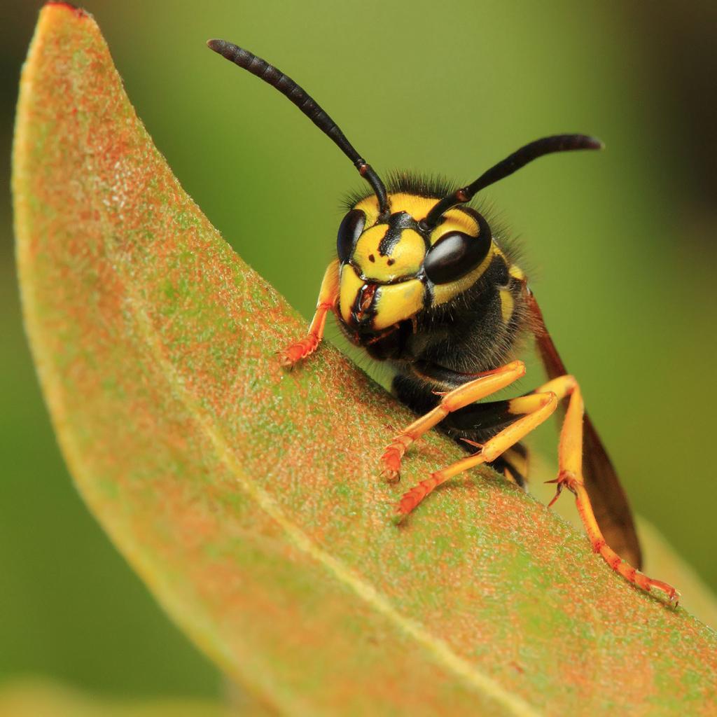 80% всех животных планеты Земля — насекомые. (DAVID MELCHOR DIAZ)