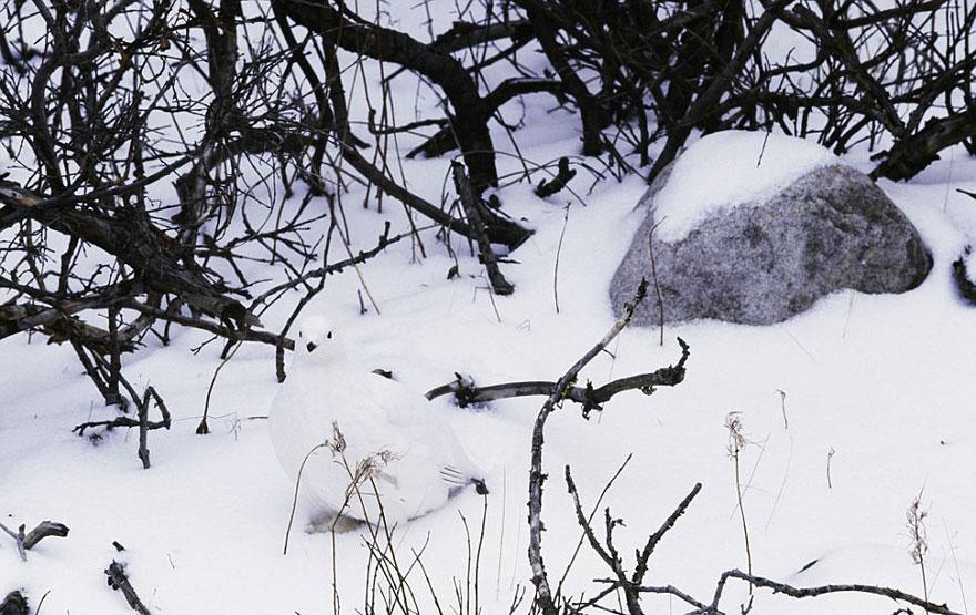 animal-camouflage-photography-art-wolfe-11
