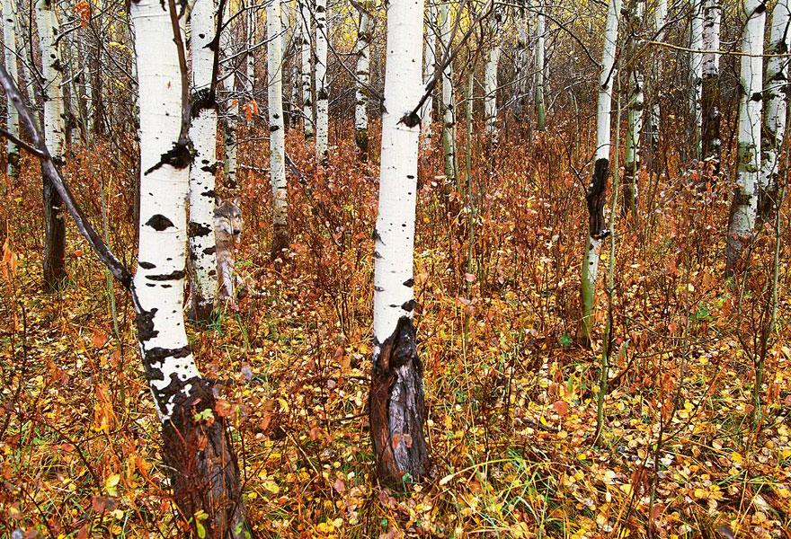 animal-camouflage-photography-art-wolfe-3