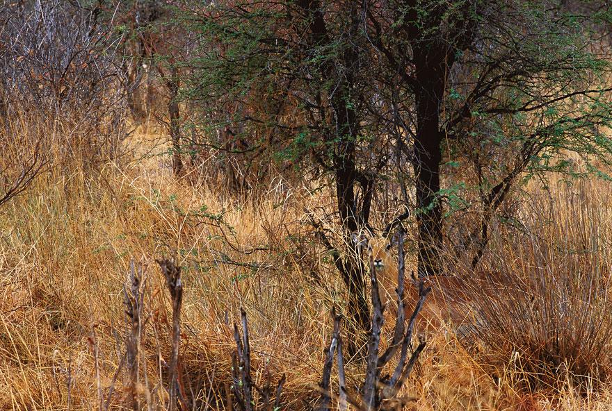 animal-camouflage-photography-art-wolfe-5