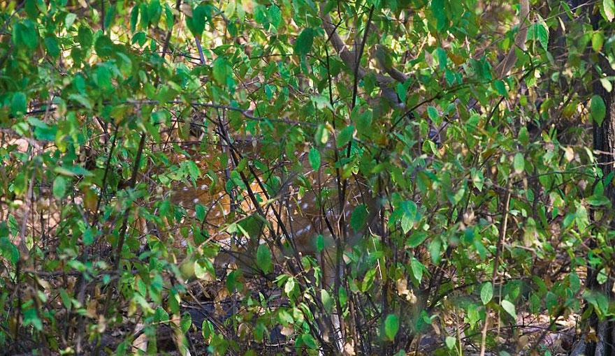 animal-camouflage-photography-art-wolfe-7