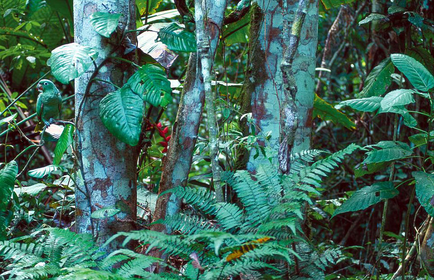 animal-camouflage-photography-art-wolfe-8