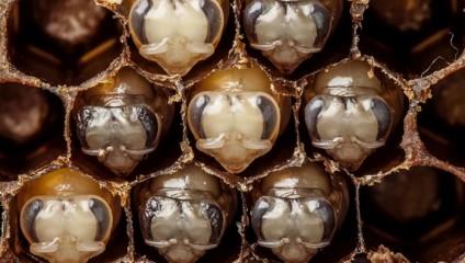 Первые дни жизни пчелы в совершенно поразительном видео