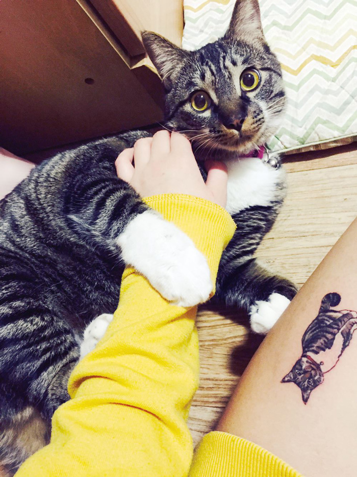 cat-tattoo-illegal-outlaw-tattoo-artists-south-korea-7