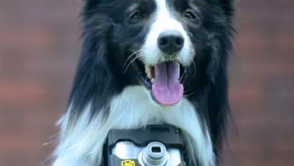 Первая в мире собака-фотограф, которая делает снимки во время всплеска эмоций