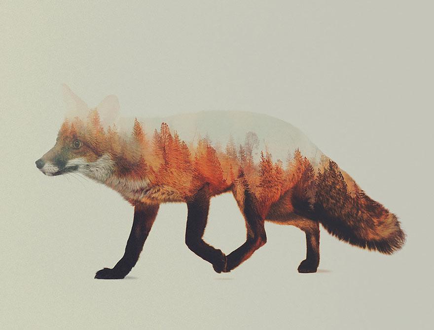 Феноменальные снимки животных, объединенные с их средой обитания