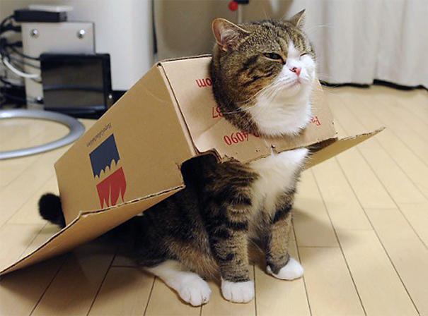 famous-internet-cats-221