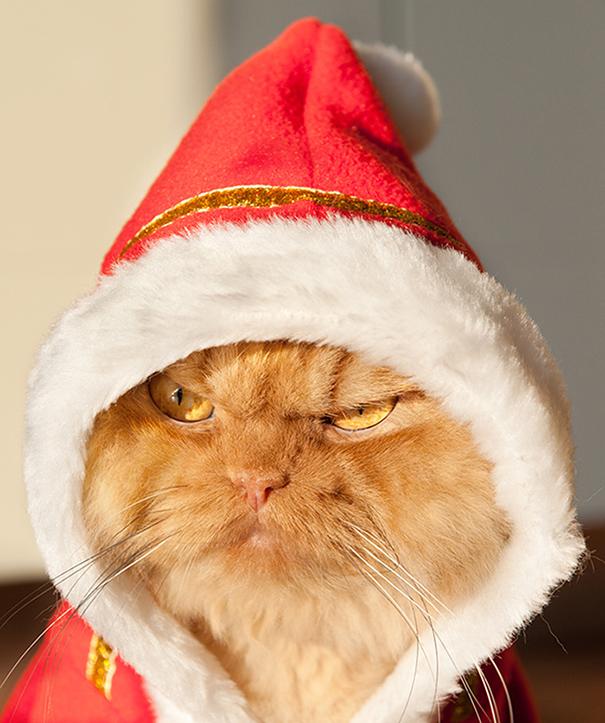 garfi-evil-grumpy-persian-cat-6
