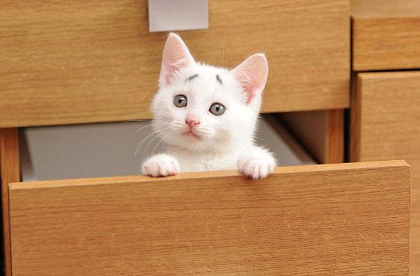 «Смущенный котёнок» — новая звезда сети Интернет