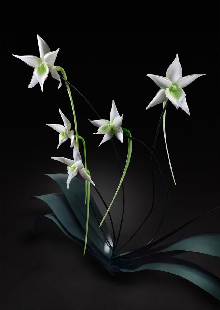 glass-flowers-jason-gamrath-19__880