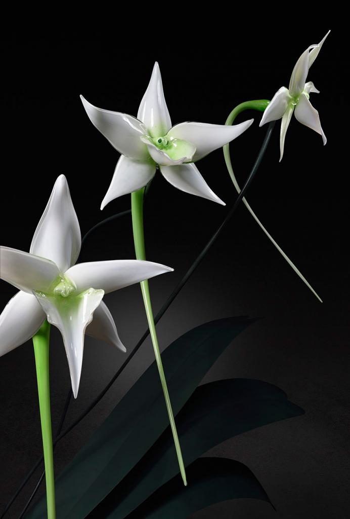 glass-flowers-jason-gamrath-21__880
