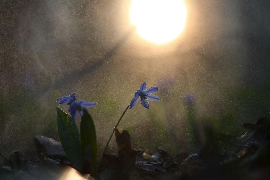 macro-photography-vadim-trunov-11__880