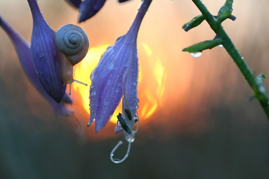 macro-photography-vadim-trunov-22__880