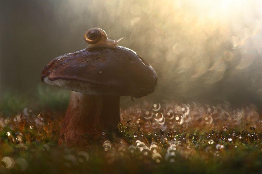 macro-photography-vadim-trunov-8__880