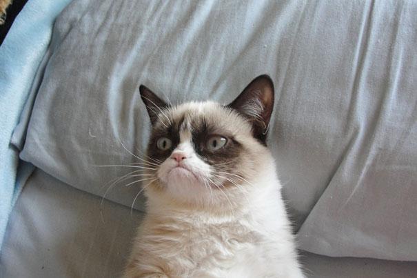 most-popular-cats-grumpy-cat-11__605