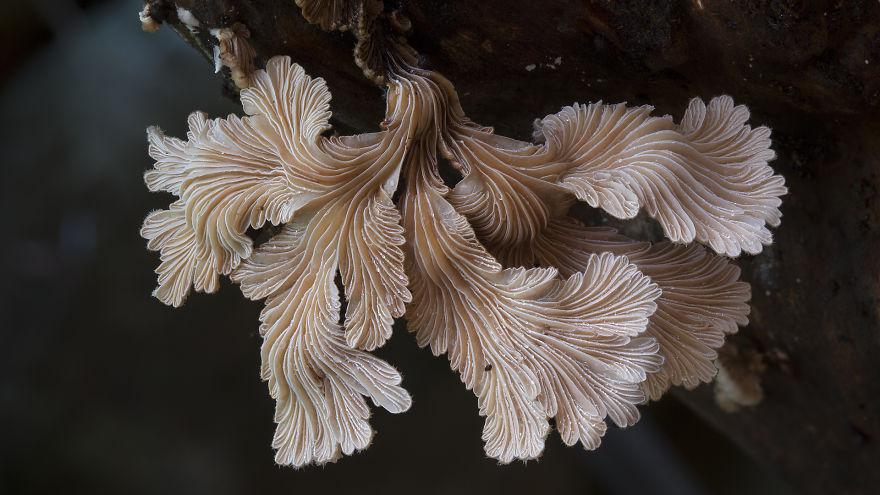 Магический мир австралийских грибов в объективе Стива Аксфорда
