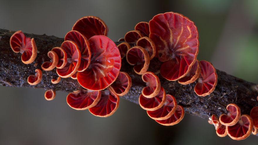 mushroom-photography-steve-axford-210