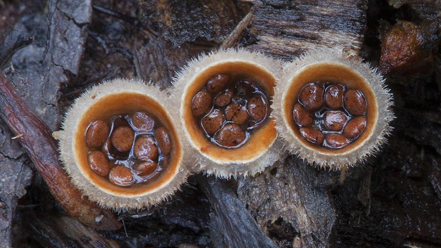 mushroom-photography-steve-axford-231
