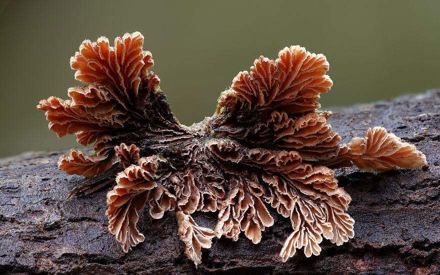 mushroom-photography-steve-axford-241