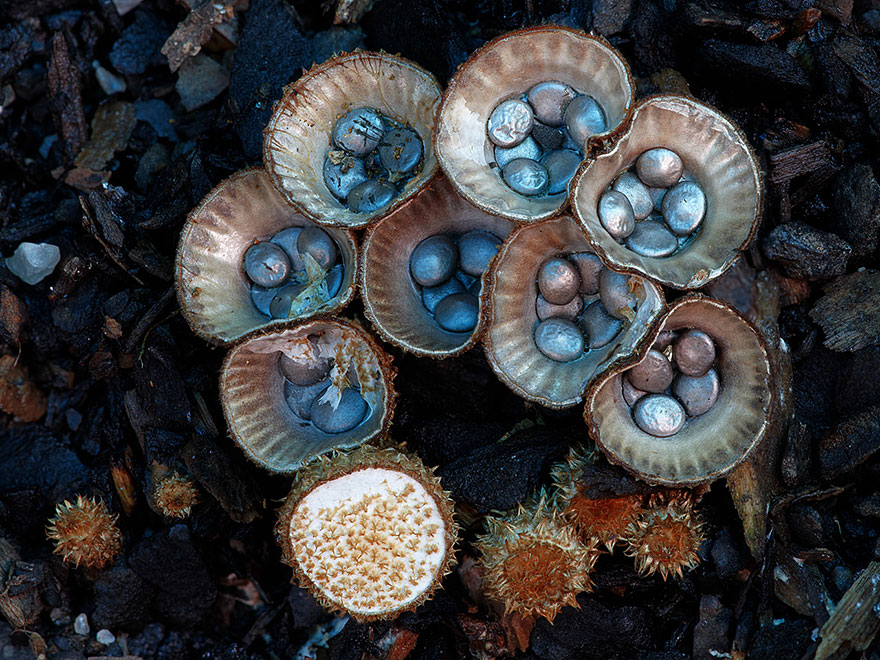 mushroom-photography-steve-axford-710