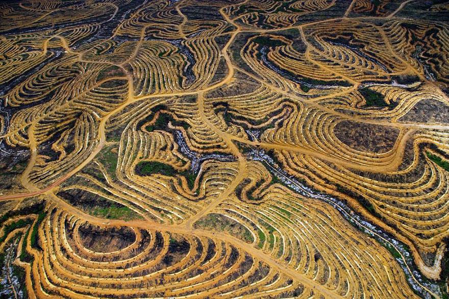 Индонезийский лес, превращённый в пальмовую плантацию.