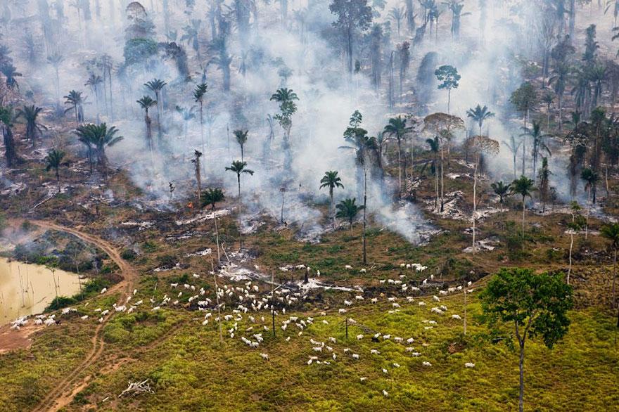 Это часть амазонских джунглей в Бразилии, сожжённая для «перепрофилирования» территории.