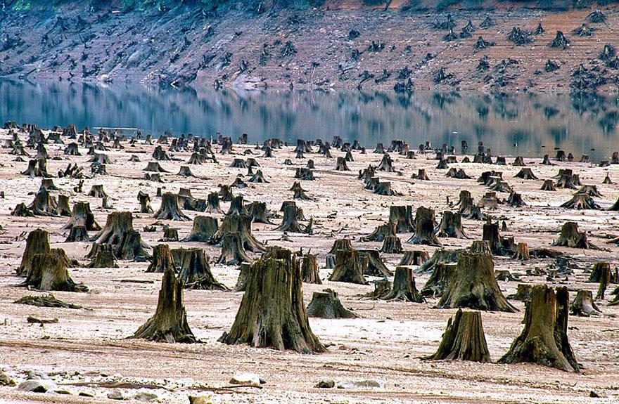 Национальный заповедник Уилламетт, Орегон, уничтожен на 99%.