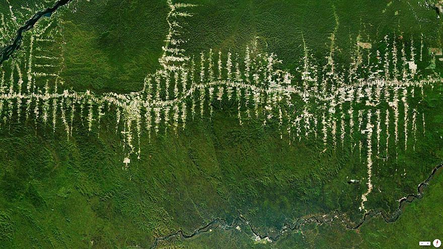 Вырубка тропического леса Амазонки в Пара, Бразилия