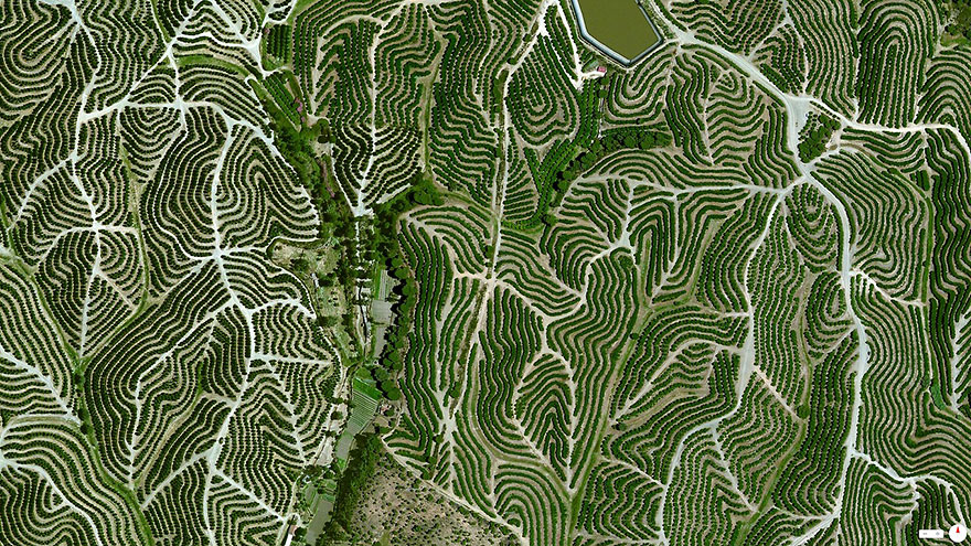 Виноградники, Уэльва, Испания