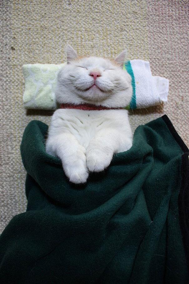 Сиронеко — самый счастливый кот на свете