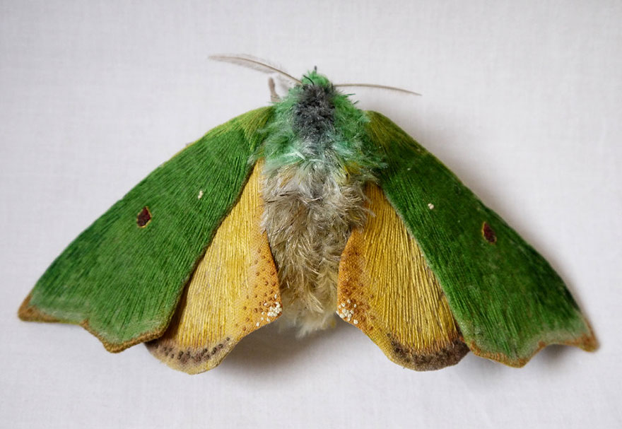 textile-sculptures-insects-moths-butterflies-yumi-okita-5