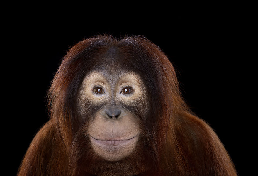 i-create-studio-portraits-of-exotic-animals-looking-directly-into-the-camera11__880