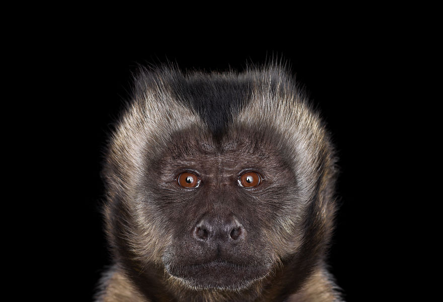 i-create-studio-portraits-of-exotic-animals-looking-directly-into-the-camera3__880