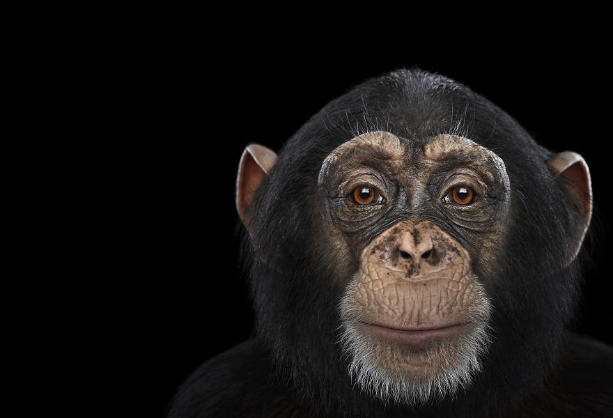 i-create-studio-portraits-of-exotic-animals-looking-directly-into-the-camera5__880