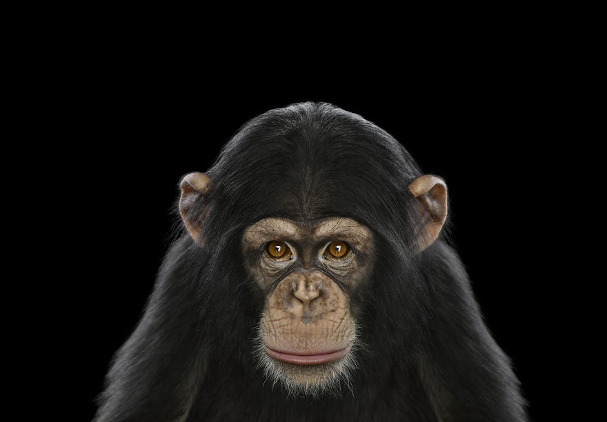 i-create-studio-portraits-of-exotic-animals-looking-directly-into-the-camera6__880