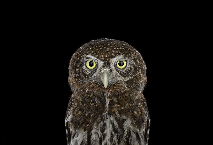 the-surreal-beauty-of-owls1__880