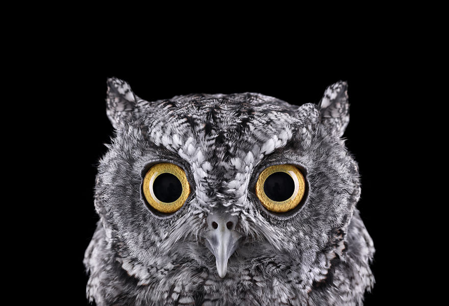 the-surreal-beauty-of-owls5__880