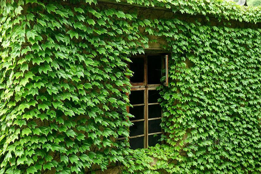 abandoned-village-zhoushan-china-108
