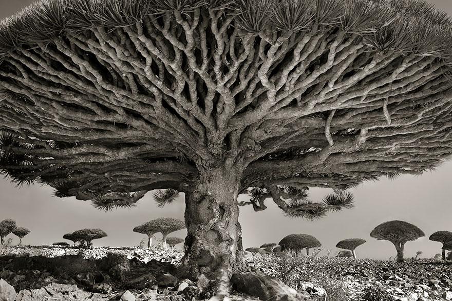 Женщина потратила 14 лет в поисках древних деревьев