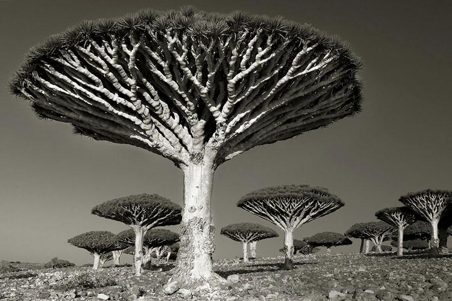 ancient-trees-beth-moon-9