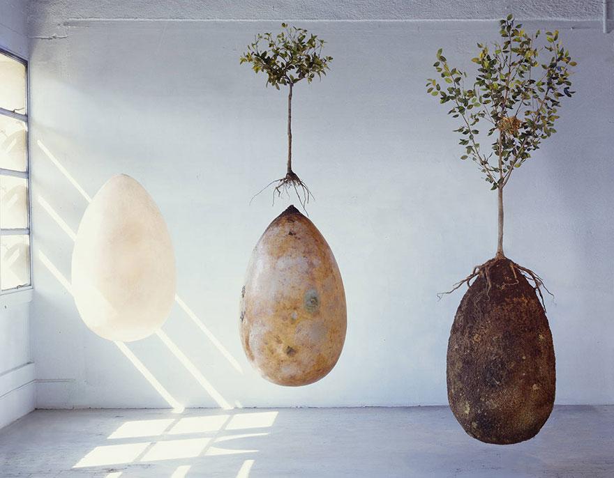 Экокапсулы из Италии превратят усопших в деревья