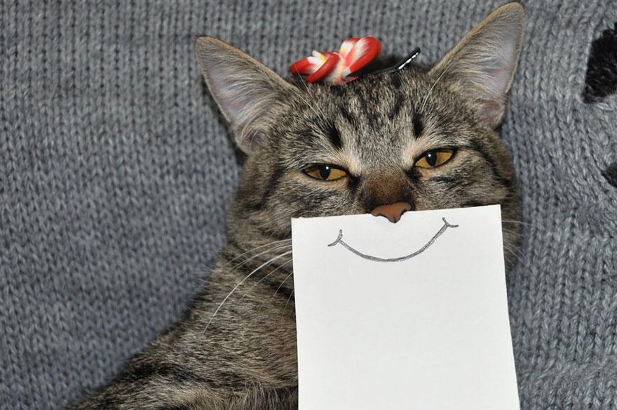 Фото кошек на бумаге
