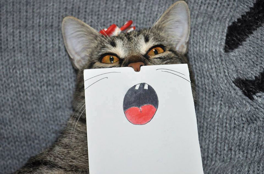 cat-paper-facial-expressions-montage-6