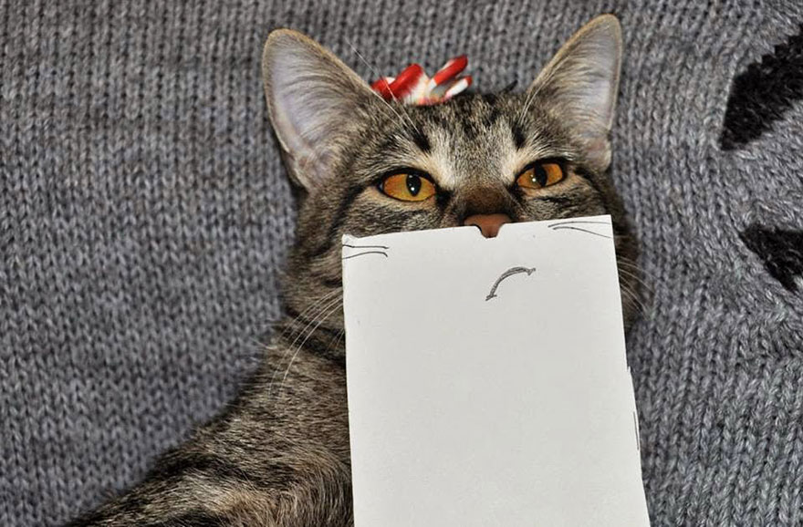 cat-paper-facial-expressions-montage-7